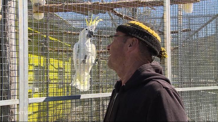 So nah kommen die Papageien.
