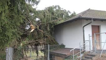 Wohlen - Sturm fällt Tanne, die fällt aufs Schützenhüsli  (2)