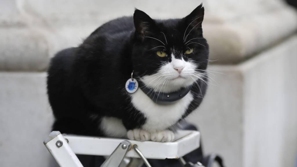 Katze des britischen Aussenministeriums geht in Rente