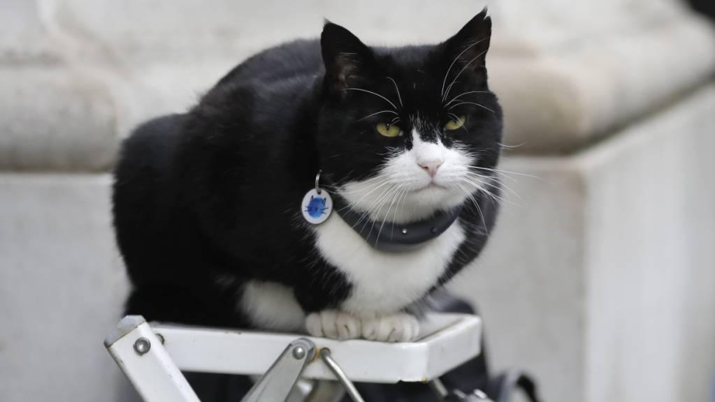 ARCHIV - Palmerston, die Katze des Außenministeriums, sitzt auf einer Fotografenleiter. Palmerston geht nach nur vier Jahren in den Ruhestand. Foto: Kirsty Wigglesworth/AP/dpa