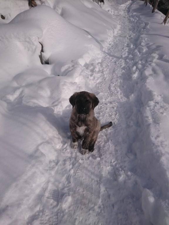 Er macht gerne Schneespaziergänge (© zVg)