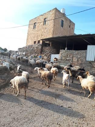 """Zu diesem Bild schreibt Pia Tschupp: """"Mein Zuhause in Yanoun (Bezirk Nablus) für drei Monate."""
