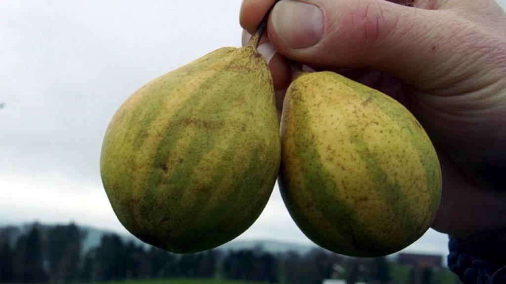 Die Birnensorte «Schweizerhose», die wegen der gestreiften Hosen der Schweizergardisten in Rom so heisst, ist vom vom Aussterben bedroht. (Archiv)