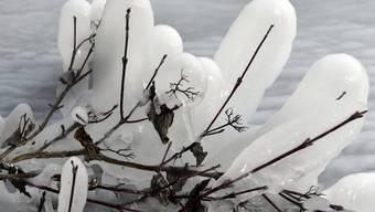 Die schönsten Winterbilder 2018