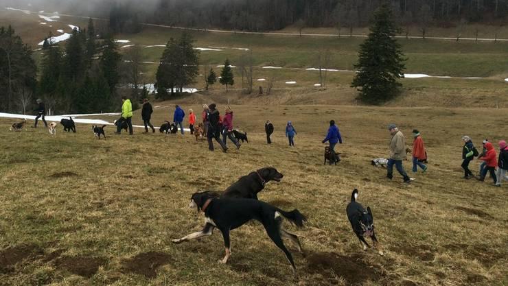 30 Hunde nahmen am Ausflug der Hundeschule Berghof Rüti bei Büren auf den Weissenstein teil.