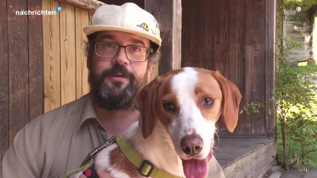 Mit «Save The Dogs» sollen es Strassenhunde besser haben
