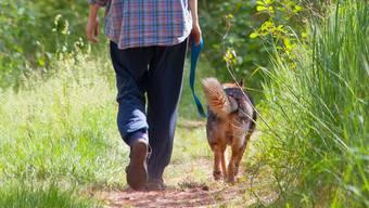 Leinenpflicht: Sie schützt den Hund vor Ansteckungen.Fotolia