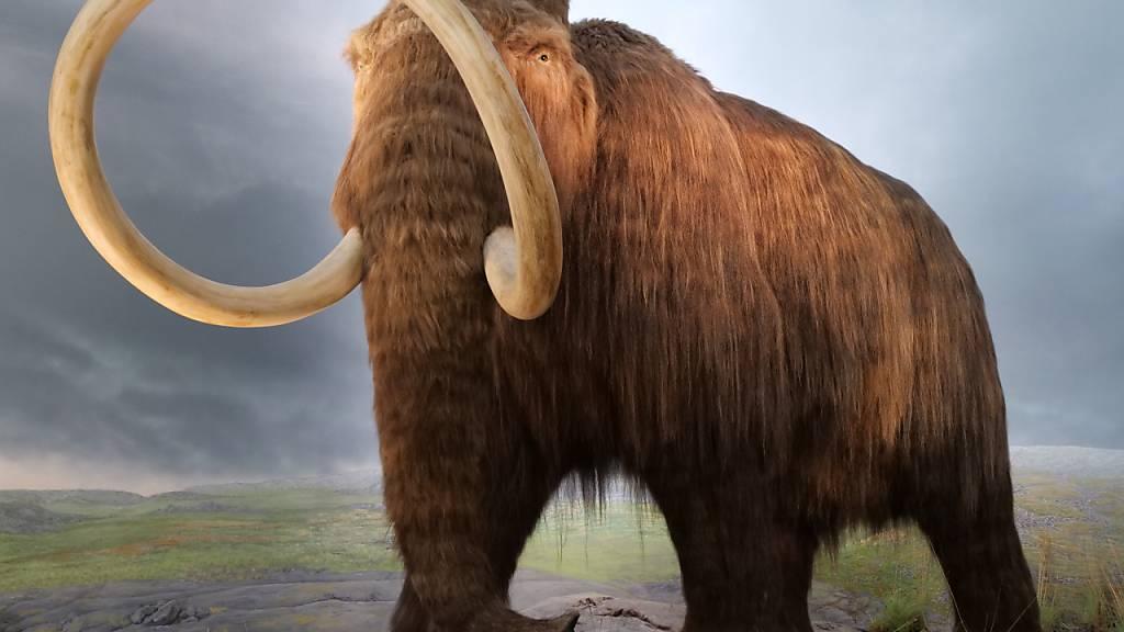 Menschheit lässt seit Jungpleistozän Säugetiere aussterben