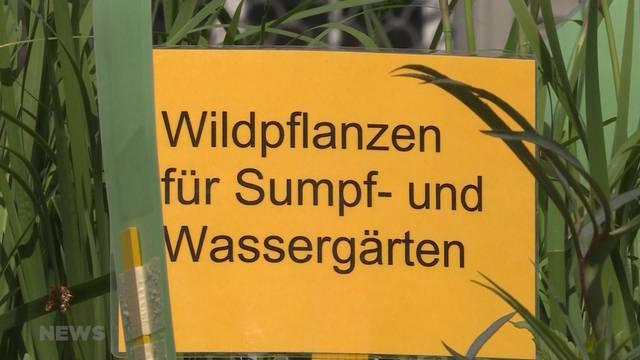 Wildpflanzen-Trend wächst immer mehr
