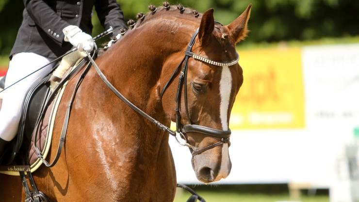 Vom 17.-19. April 2015 zeigen sich Pferd und Reiter von der besten Seite