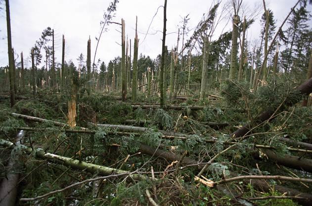 Der Orkan richtete vor allem in Nordfrankreich, der Schweiz, Süddeutschland und Österreich die höchsten Sturmschäden der jüngeren europäischen Geschichte an.