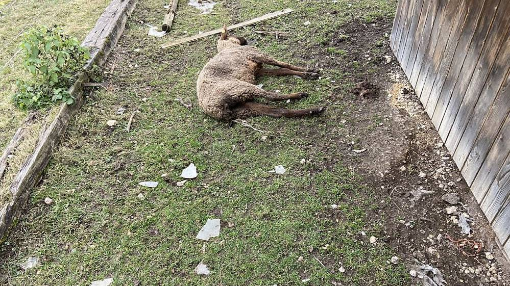 Tierschutzfall Oftringen: 57-jähriger Schweizer wieder auf freiem Fuss