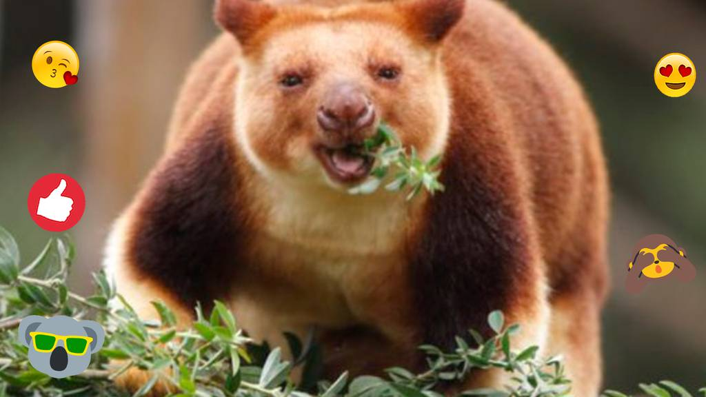 Hobby-Botaniker entdeckt seltene Känguru-Art wieder