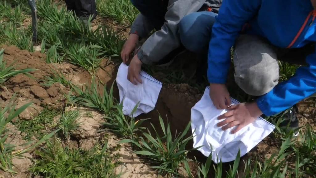 Tausend Hobby-Forscher vergraben Unterhosen im Garten