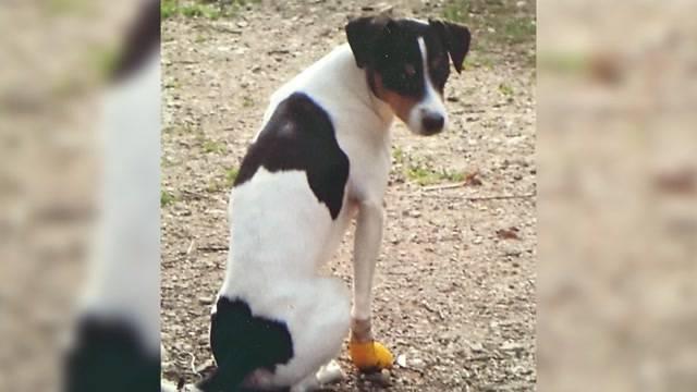 Hunde-Totschlägerin freigesprochen