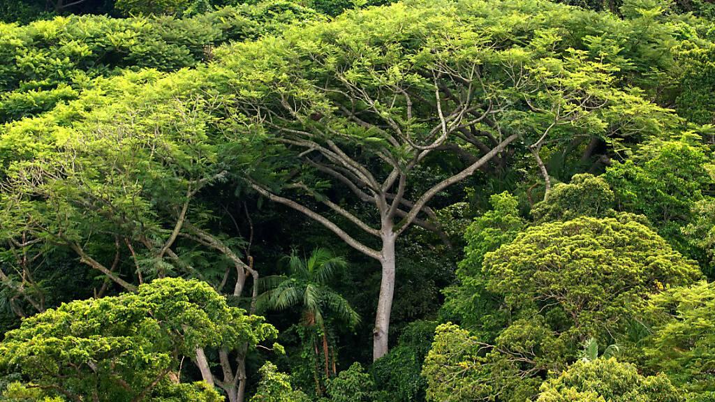 Abholzung des Amazonaswaldes geht auf Rekordniveau weiter