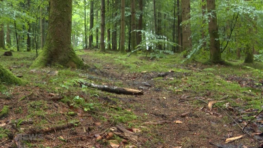 Gutes Zeugnis für Schweizer Wälder