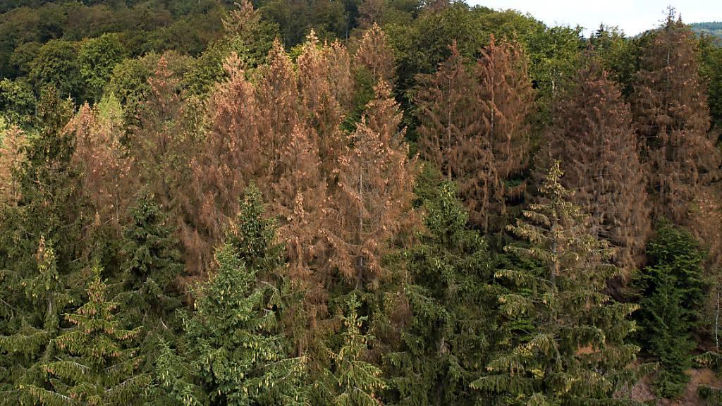 Der Wald der Zukunft beherbergt vor allem kleine Bäume