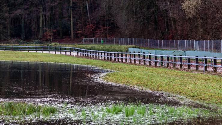 Kleindöttingen: Auf dem Areal der Windhunde-Rennbahn steht Wasser – der Biber hat den daneben fliessenden Bach gestaut.