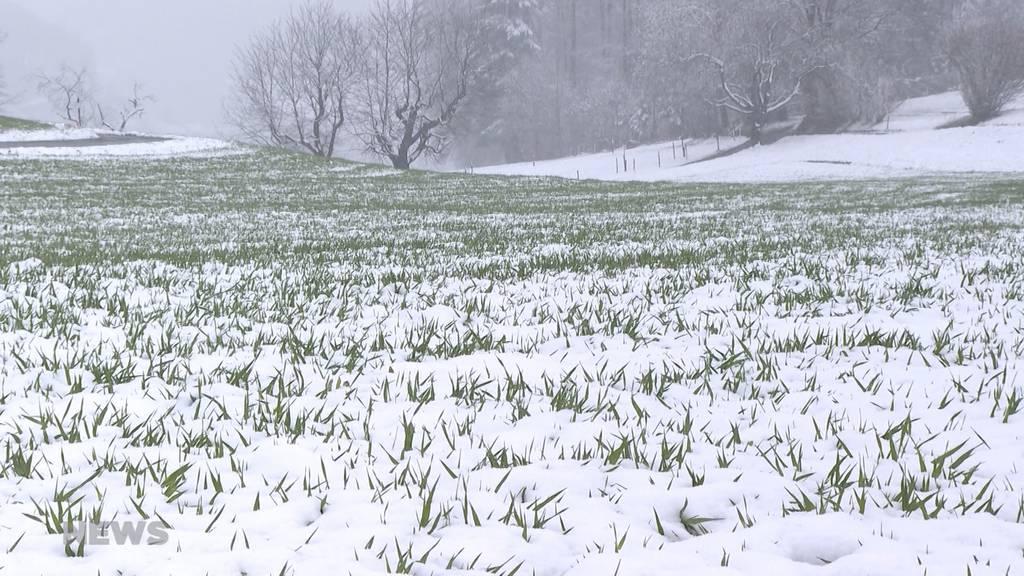 Kälteschock zum Wochenstart: Temperaturwechsel ist Stresstest für Menschen und Pflanzen