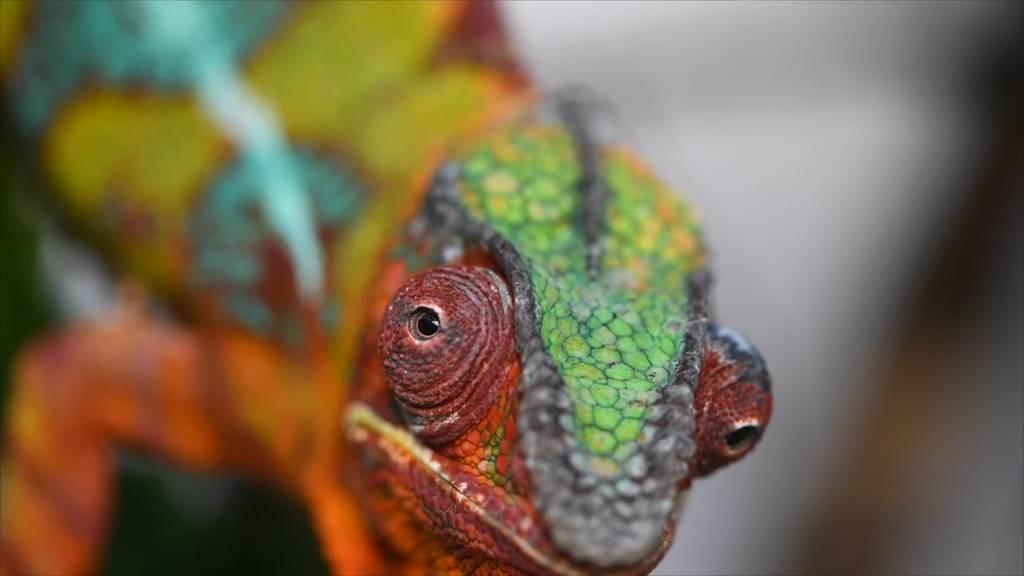 Farbige Drachen aus Zürich für die Bionik-Forschung