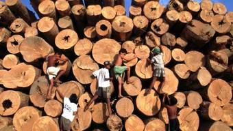 Tropenholz aus dem Amazonas-Gebiet (Archiv)