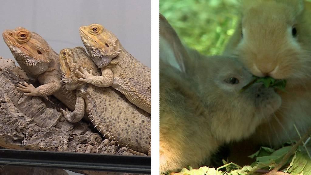 Zweite Chance für exotische Reptilien / Happy End für Kaninchen