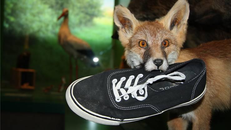 Der Fuchs amüsiert sich in der Stadt auf seine Weise, wie diese Szene im Naturmuseum beweist.
