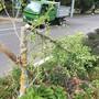Schon wieder Jungbäume in Riehen beschädigt