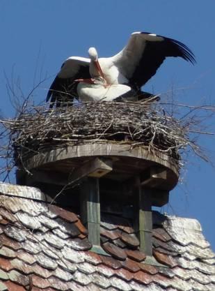 ... in Kaiseraugst sein Nest bezogen