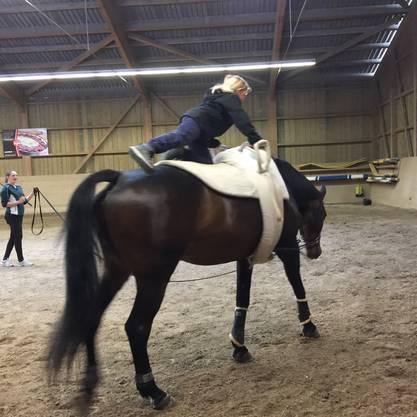 erste Übungen auf dem Pferd
