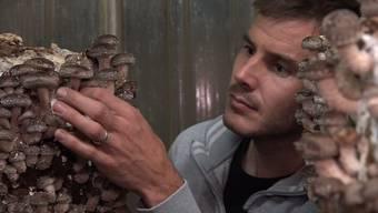 In den Bunkern sind nicht nur die Bedingungen optimal, die wertvollen Pilze sind auch ganz schön sicher verwahrt.