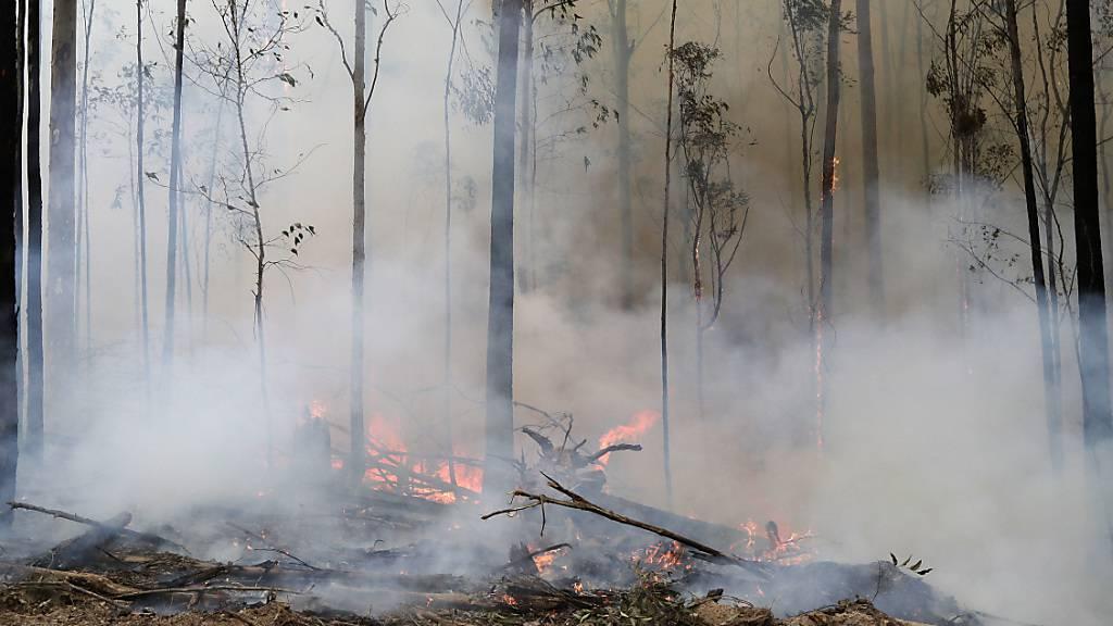 Mehr als 50 Waldbrände in Australien