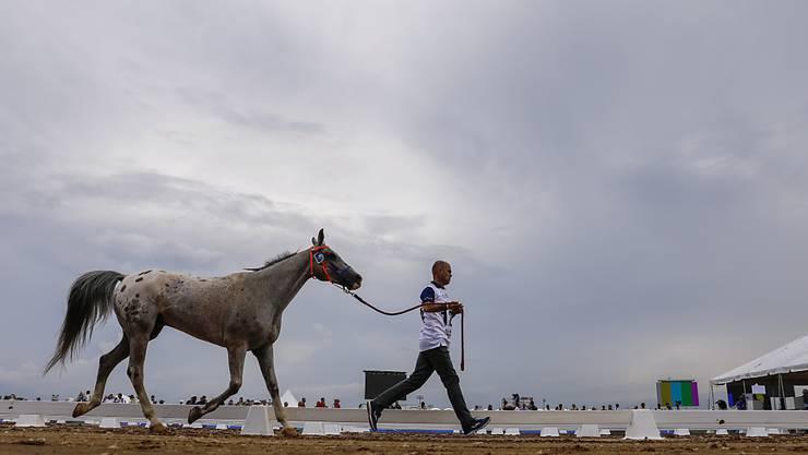 Zwölf Tage lang ist Tryon (USA) das Mekka des Pferdesports. Gleich in acht Disziplinen werden die Weltmeister ermittelt