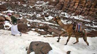 Beduine mit Kamel im verschneiten Sinai (Archiv)