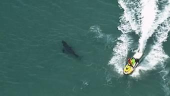 Ein Surfer stirbt bei einer Hai-Attacke