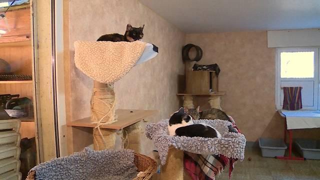 Katzenasyl «Letzte Zuflucht» — Feuerwerk: Horror für Haustiere
