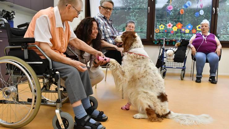 Karin Brunner leistet mit ihrem Hund im Alterszentrum Sunnepark in Egerkingen Freiwilligenarbeit.