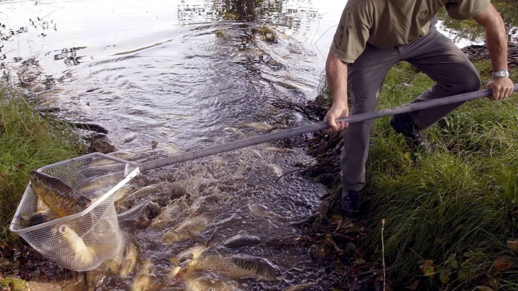 Jeden zweiten Tag ein Fischsterben in der Schweiz
