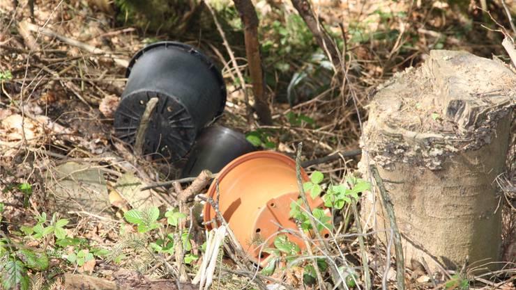 Aufgrund illegaler Ablagerungen von Grüngut können sich exotische Gartenpflanzen im Wald ausbreiten.