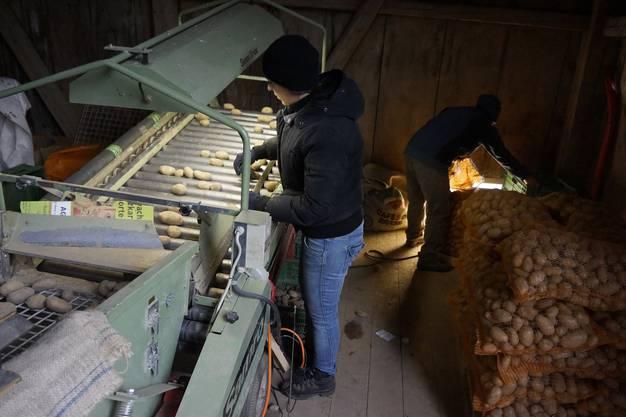 Deshalb suchen die Kartoffeln vom Biohof Küttigkofen Abnehmer.