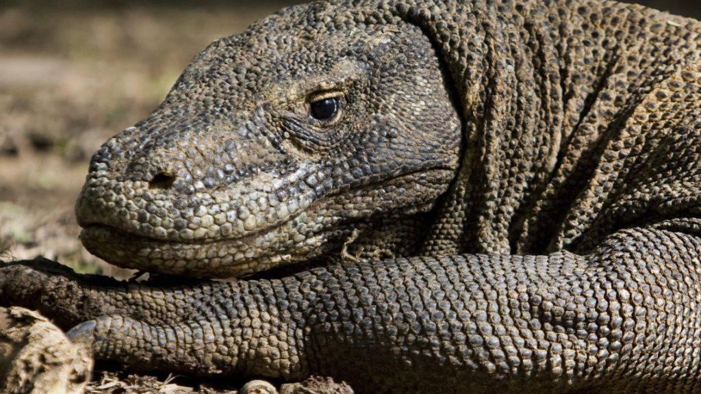 «Drachen-Insel» will keine Billig-Touristen mehr