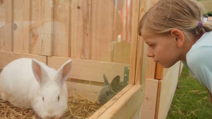 Schau mir in die Augen Kaninchen.
