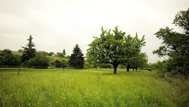 Grün soweit das Auge reicht: Die Kirchenburg wird in eine Grünzone umgewandelt. (Symbolbild)