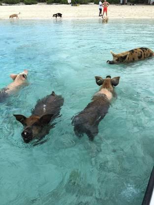 Wirklich jeder Tourist, der auf die Inseln kommt, will sie sehen und mit ihnen schwimmen.
