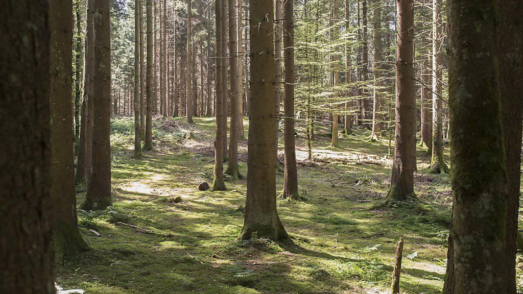 Der Wald soll fit gemacht werden für den Klimawandel. (Archiv)