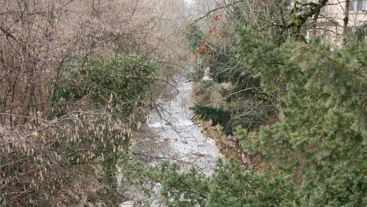 Die Bünz, von der Brücke Bruggerstrasse Richtung Alterszentrum Chestenberg betrachtet: Auf diesem Abschnitt soll der Bach natürlicher gestaltet werden.