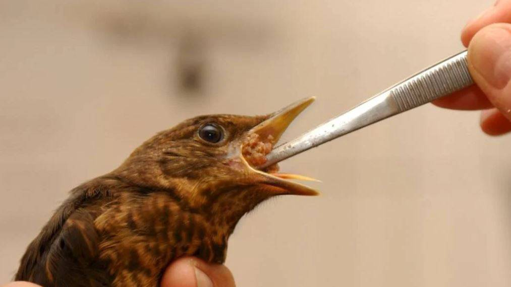 Neuer Standort für Wildvogelpflegestation eröffnet