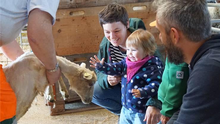 Die eineinhalb Jahre alte Ida streichelt begeistert das frisch geschorene Schaf.