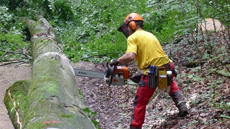 Olten will der Forstbetriebsgemeinschaft Unterer Hauenstein (FBG) beitreten. (Symbolbild)
